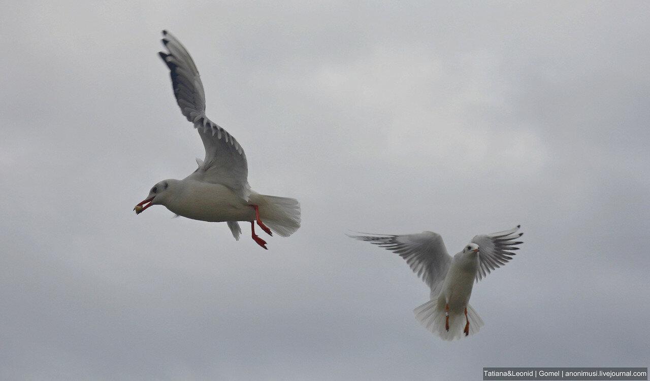 #птицыпочетвергам