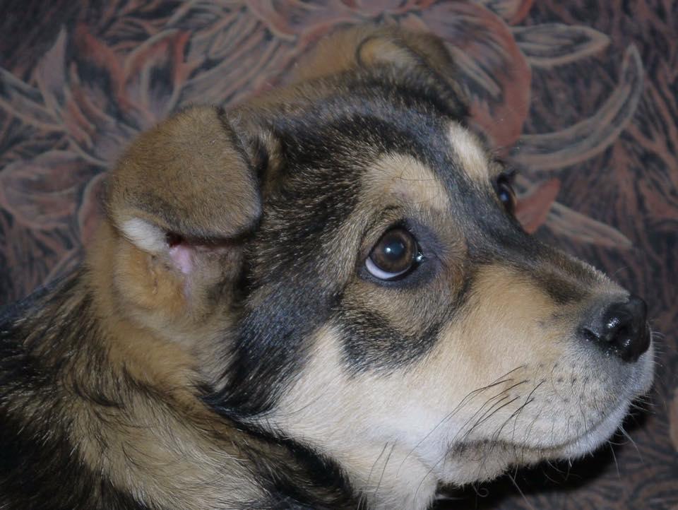 Барли собака из приюта догпорта