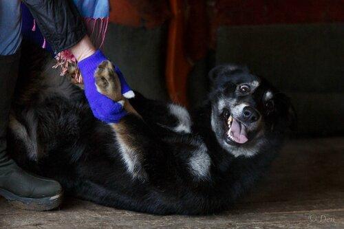 Мартышка собака из приюта догпорта