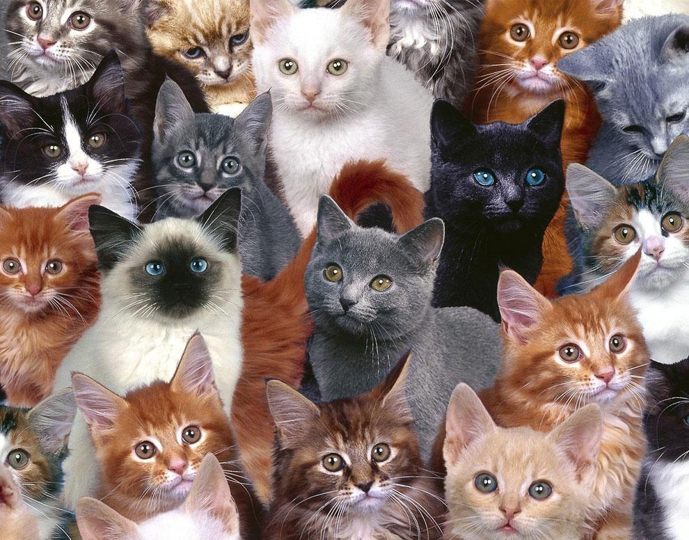 Самое приятное в кошке — любовь к комфорту. Камптон Маккензи