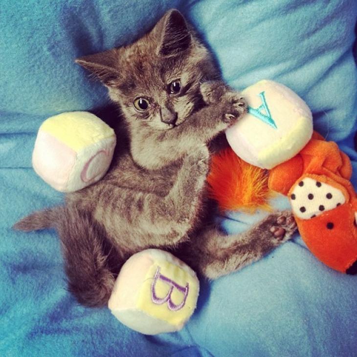 Что-то не так с Кевином: этот кот всегда выглядит удивленным (17 фото)