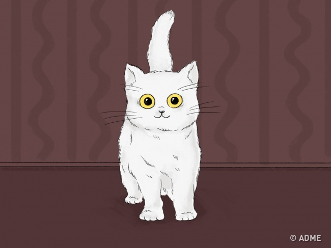 Хвост— настоящий барометр кошачьего настроения. Когда ваш питомец держит его трубой исгибает тольк