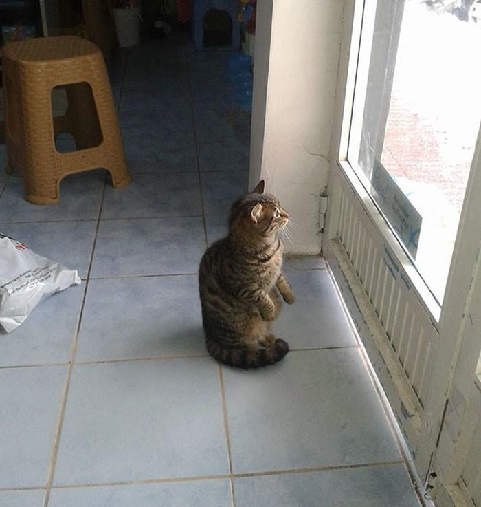 Байал говорит, что кошки благодарны ему за приют