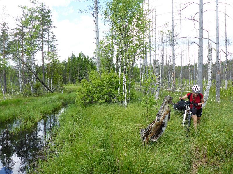 с велосипедом по болоту в пвд на карельском перешейке
