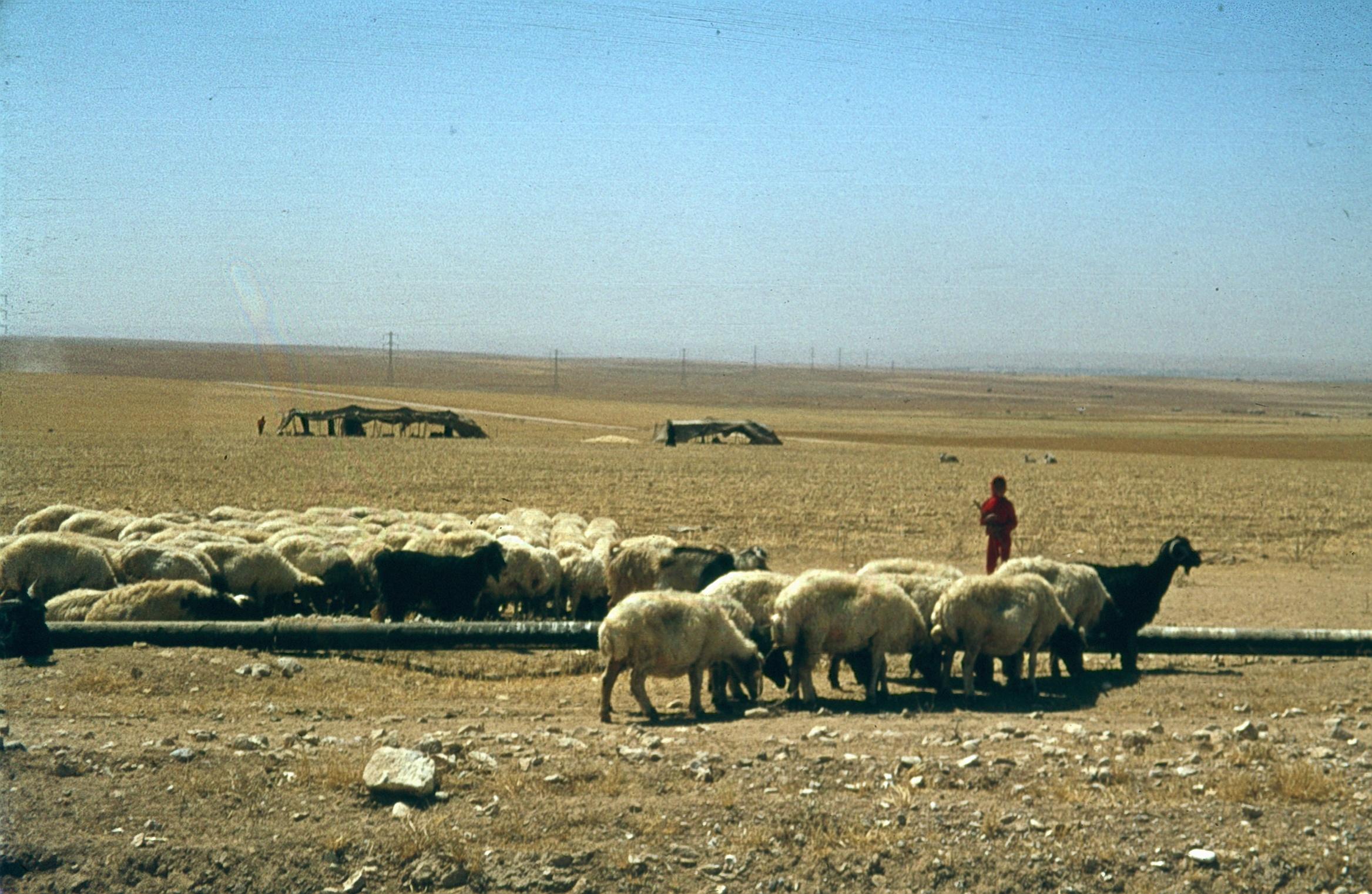 Негев. Пастух бедуин