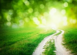 Светлая дорога.