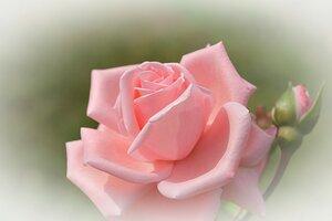 Нежность и красота