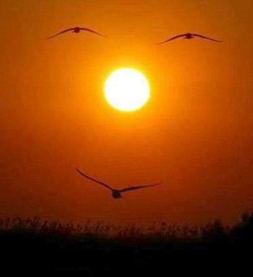 Солнце и птицы открытки фото рисунки картинки поздравления