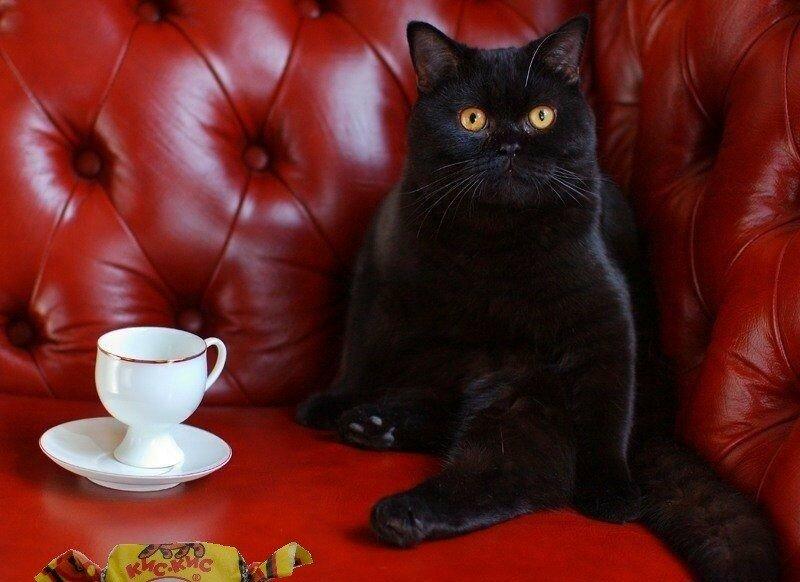 картинки доброе утро с черной кошкой пусть ветер
