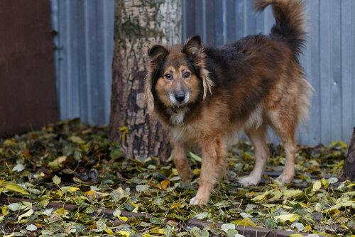 Рыжий Фокс собака из приюта в москве догпорт фото