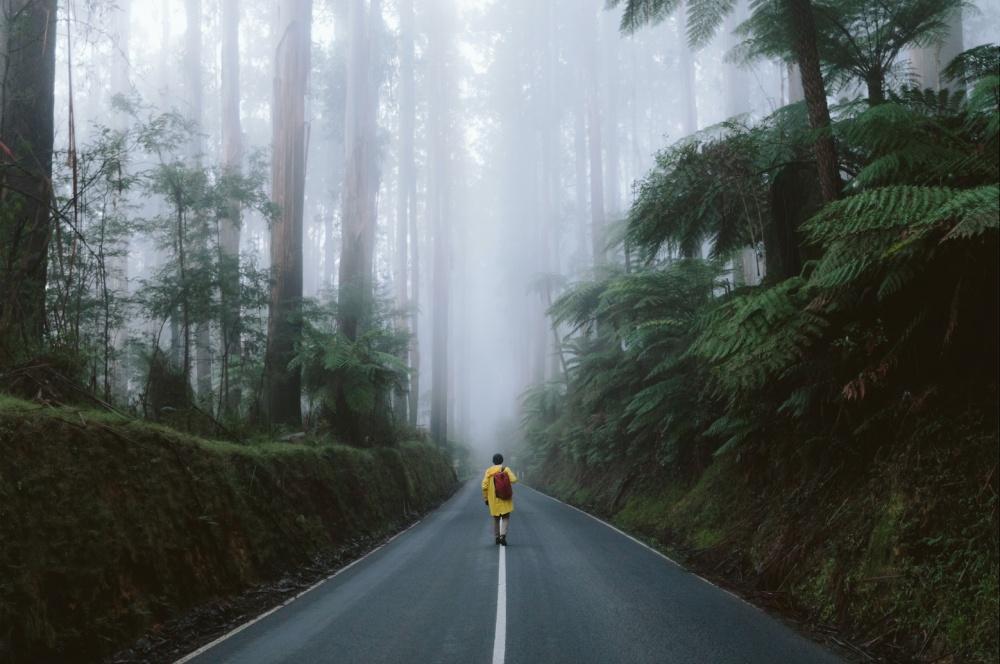© Benjamin Lee/REX/Shutterstock  Лесная дорога Блэк Спур (Black Spur Drive) вовлажном лесу Ав