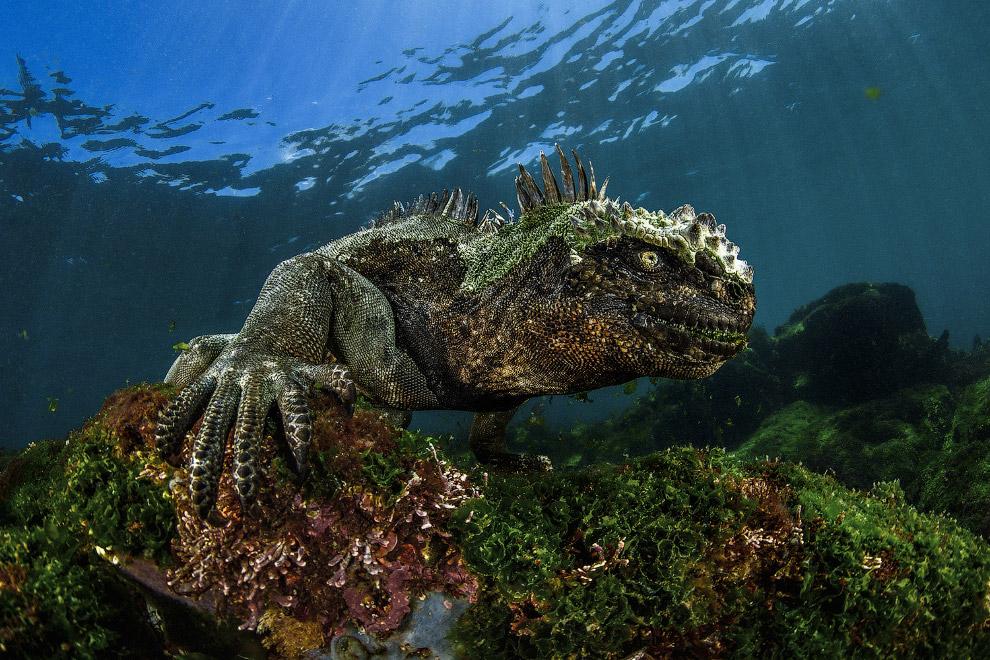 14. Сенот на полуострове Юкатан в Мексике. Сеноты — естественные провалы, образованные от обруш