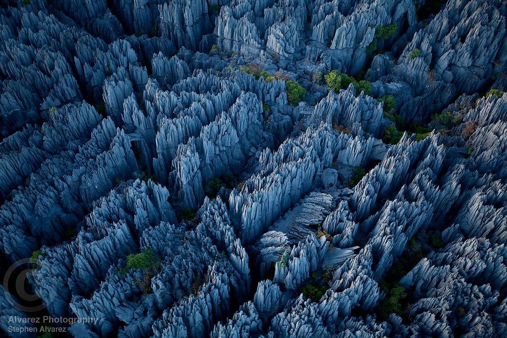 В некоторых местах высота «каменного леса» достигает 50 метров, а в нем растут редкие виды настоящих