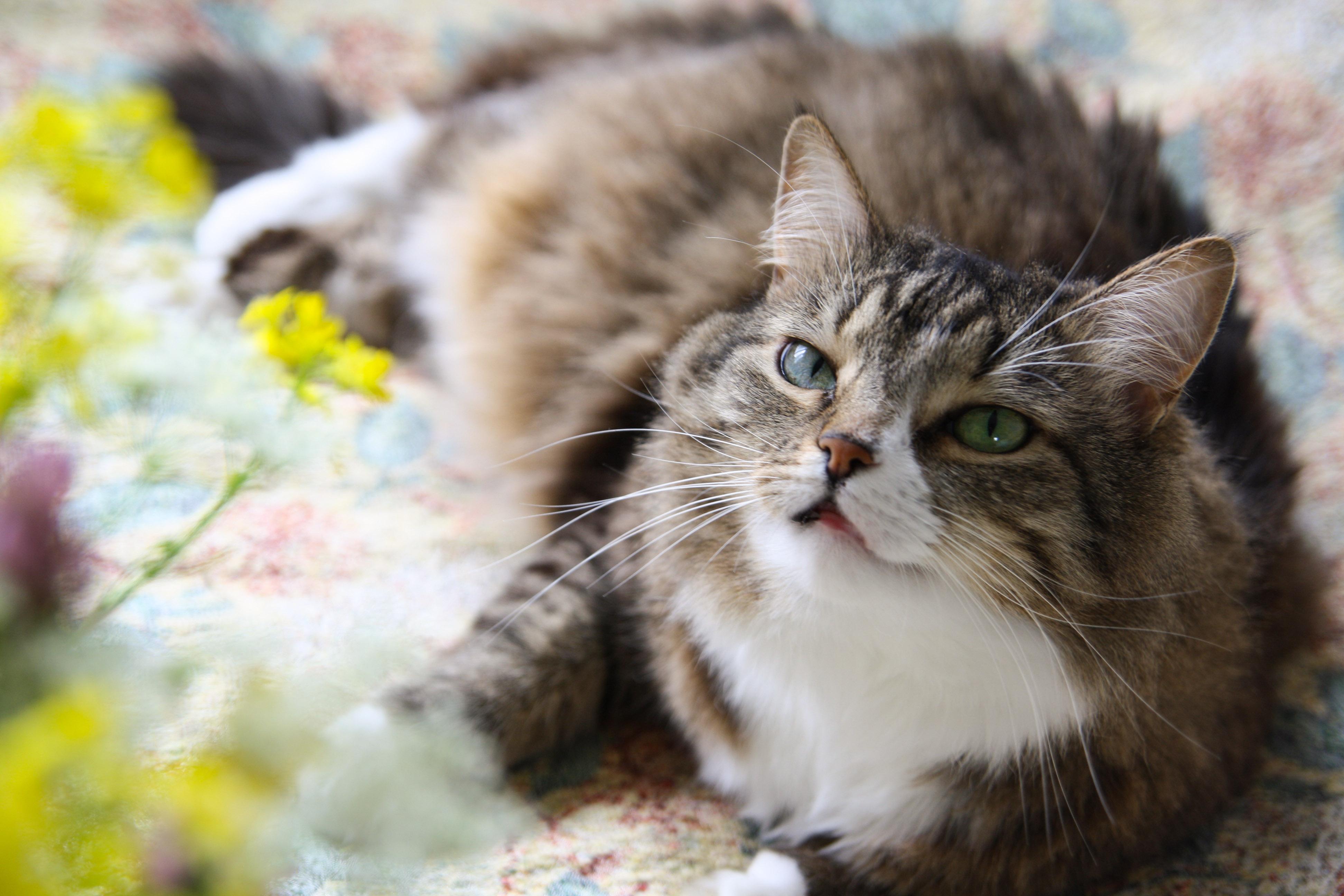 Мои котейки. Лиза.