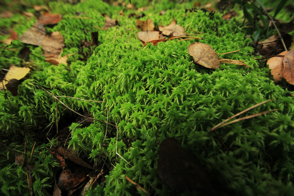 Безымянный лес под Электросталью. Поздняя осень в кадре ...