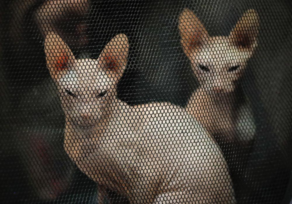 Выставка домашних животных в столице Румынии