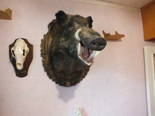 ВТверской области неизвестные украли чучела животных