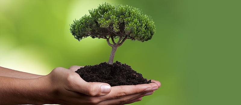 Всероссийский день посадки леса. Сделаем страну зеленой