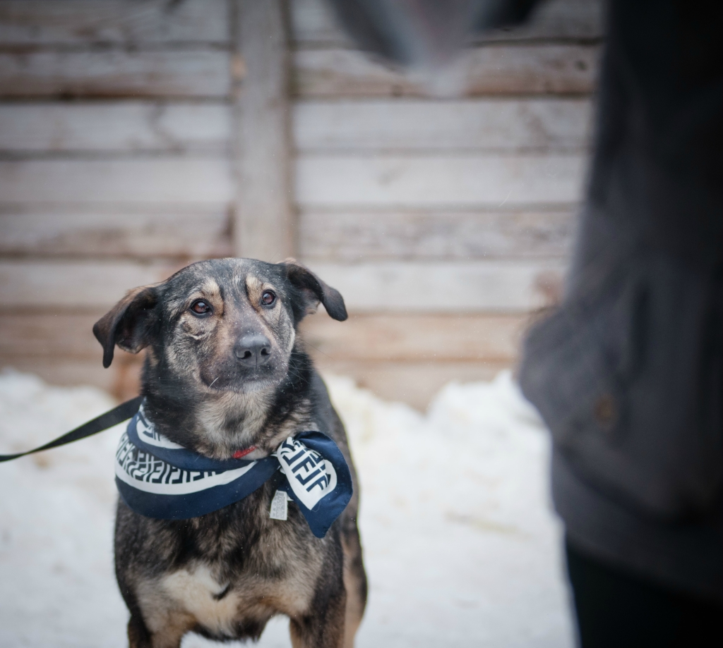Руна собака из догпорта