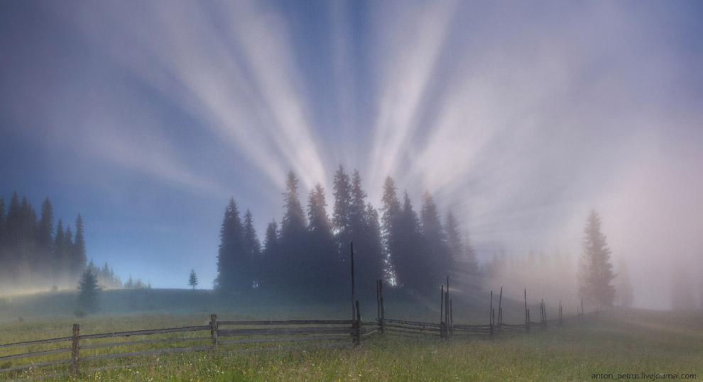 14. Такое ощущение, что за лесом поставили мощный прожектор, и он светил сквозь ветки и туман…