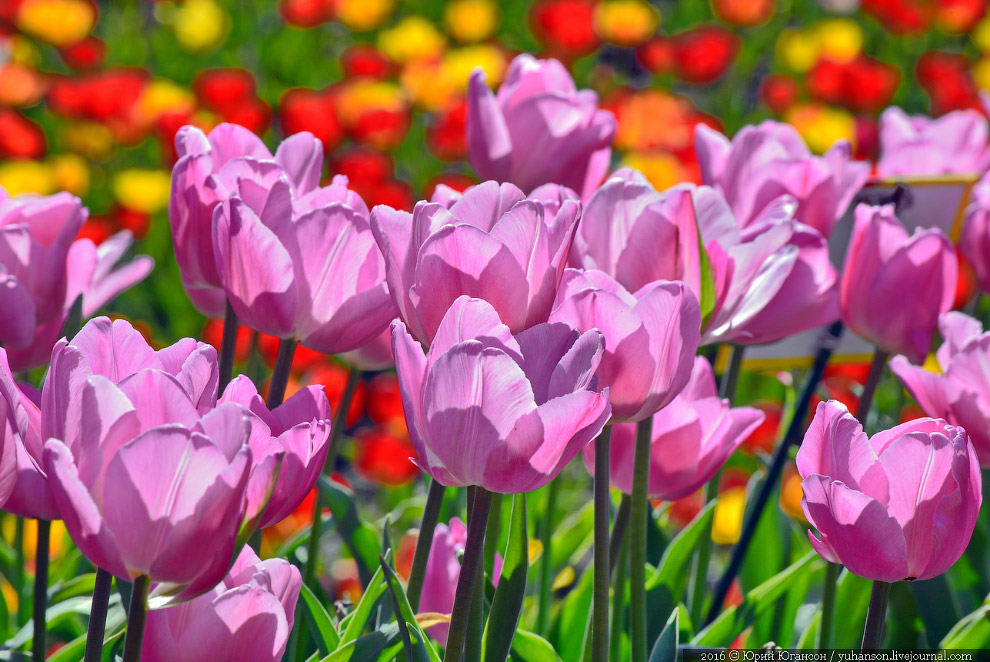 4. За 12 лет неутомимой деятельности директор ботанического сада Христиан Стевен собрал более 4