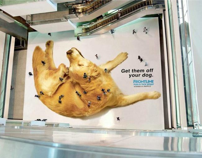 © Frontlineplus   Правильная реклама приюта для собак