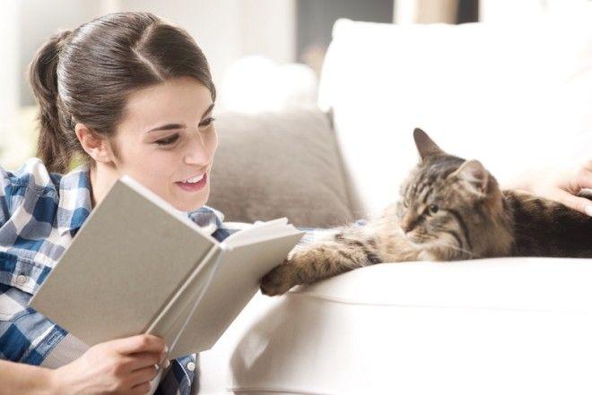 4. Ты станешь значительно умнее. Общение с таким сложным животным, как кошка, повышает уровень интел