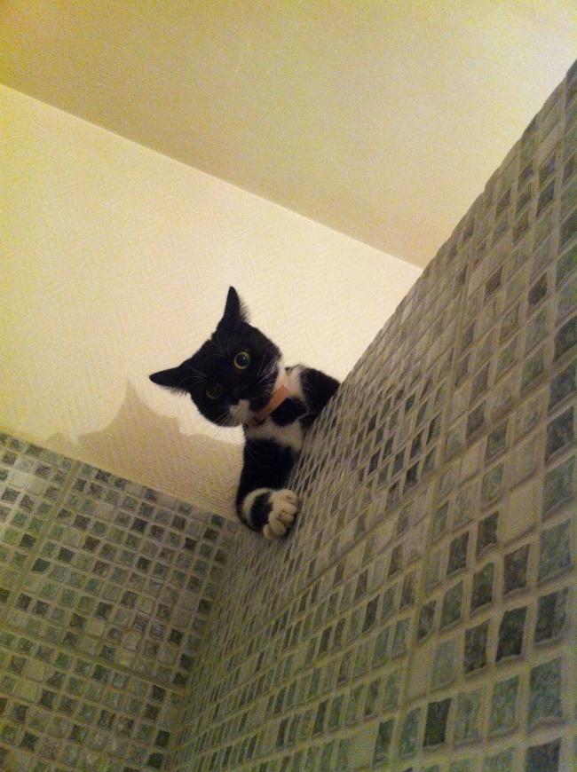 © imgur  «Былобы просто замечательно, еслибы тызакончил принимать душ ипокормил меня».