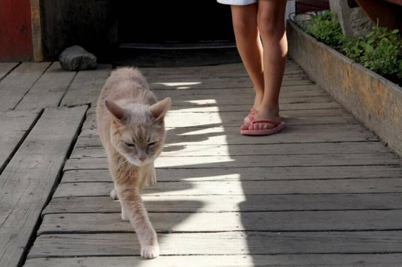 Знаменитый кот-мэр из Аляски умер в возрасте 20 лет (7 фото)
