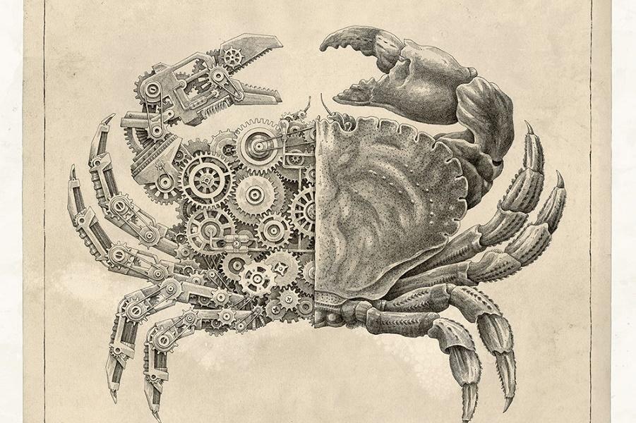 Механическая биология
