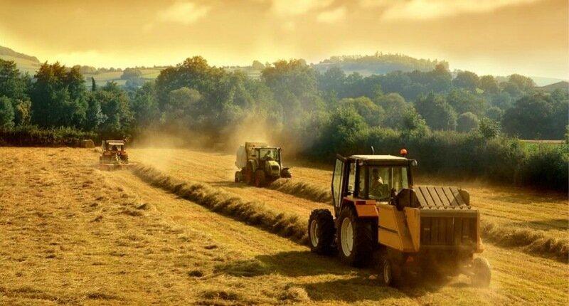 Ферма (підприємство)
