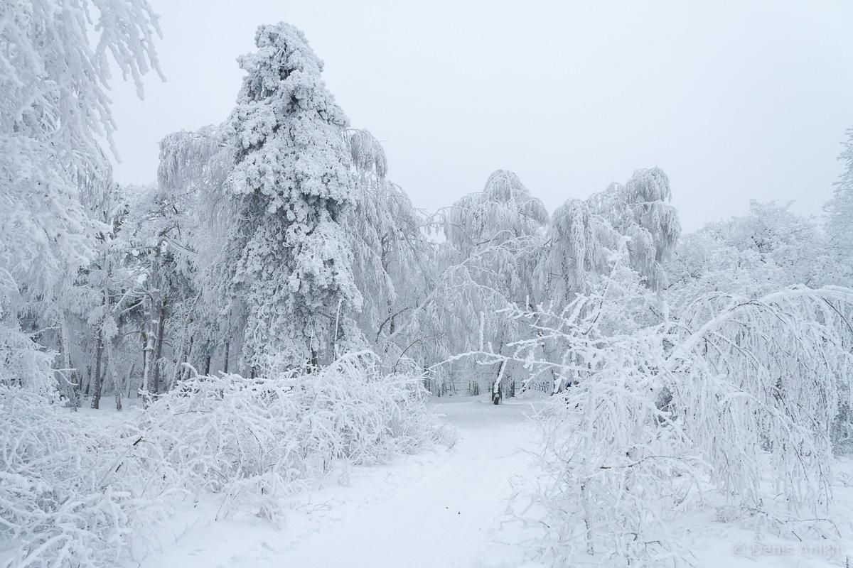Кумысная поляна зима фото 6