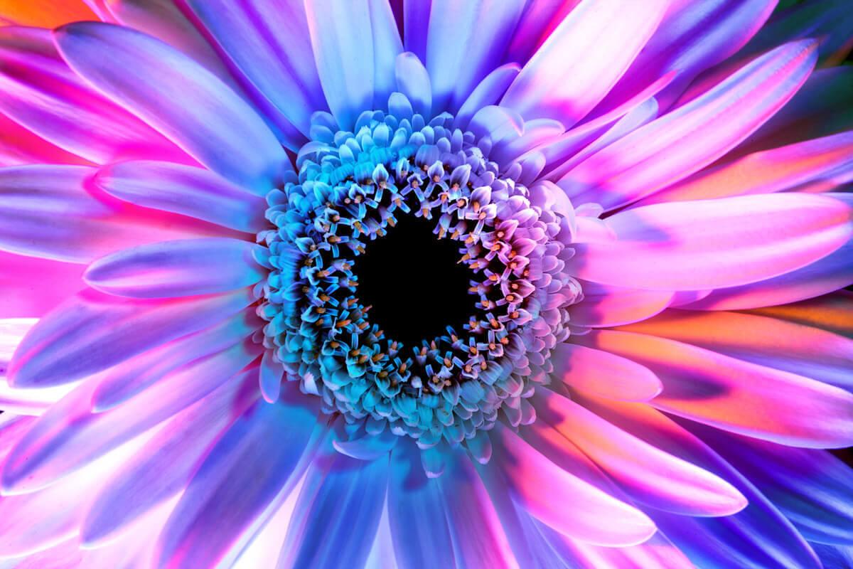 Психоделические фото цветов Мэгги Уэст