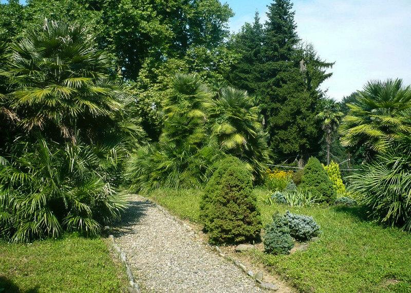 Ботанический сад и Зеленый мыс