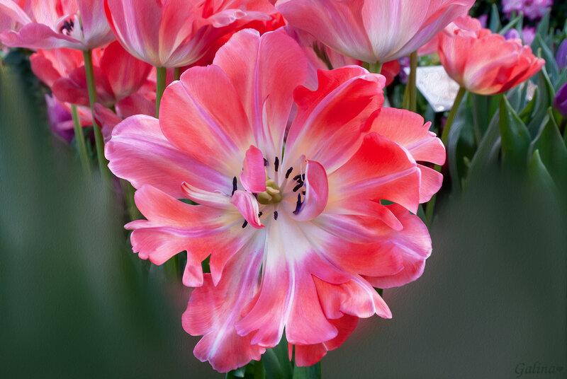 Я цвету для вас