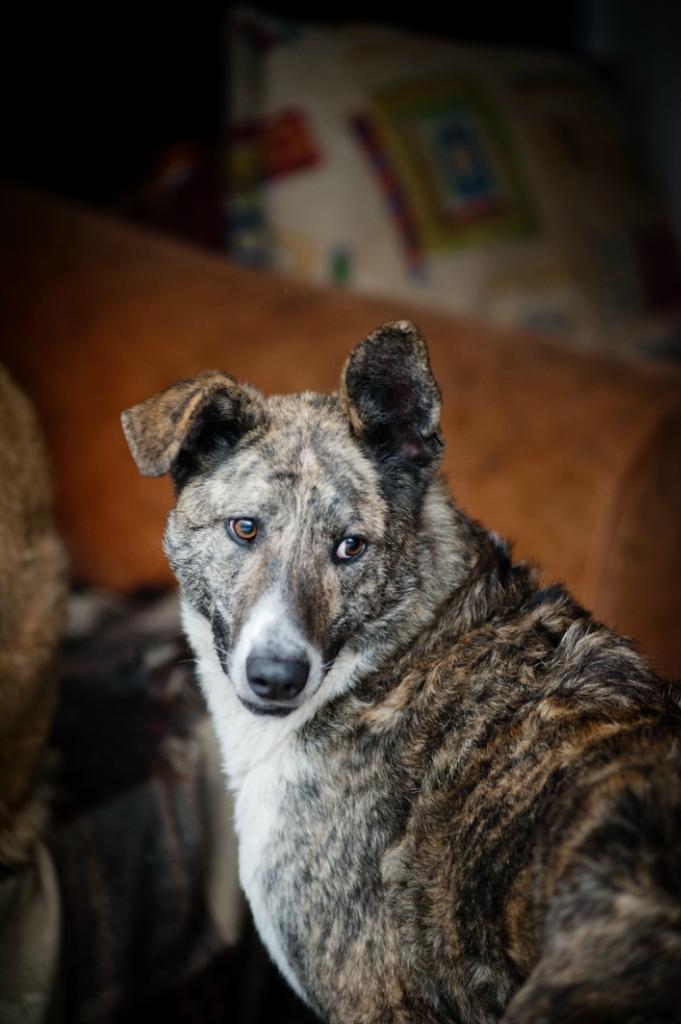 Вашингтон собака из приюта догпорта