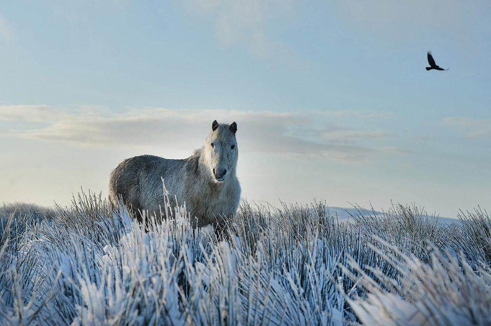4. Снежный пейзаж возле Брауншвейге, Германия, 18 января 2016. (Фото Julian Stratenschulte):