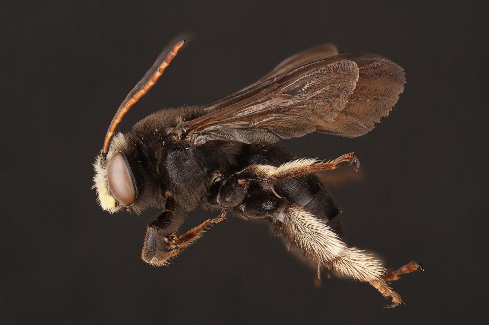 8. Пчёлы в качестве опылителей крайне важны в сельском хозяйстве, и это приводит к тому, что фе