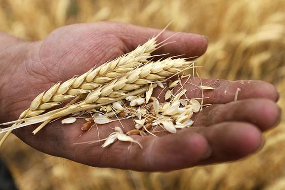 Турецкие импортёры подтвердили приостановку закупок сельхозпродукции из РФ