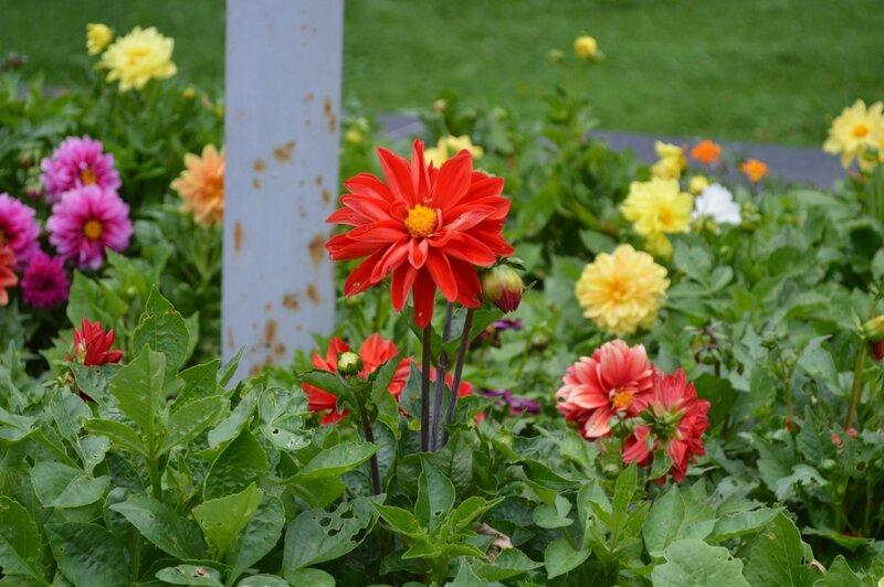 калуга.цветы