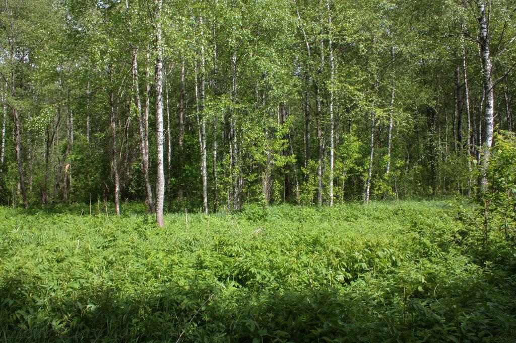 Лес-64.jpg
