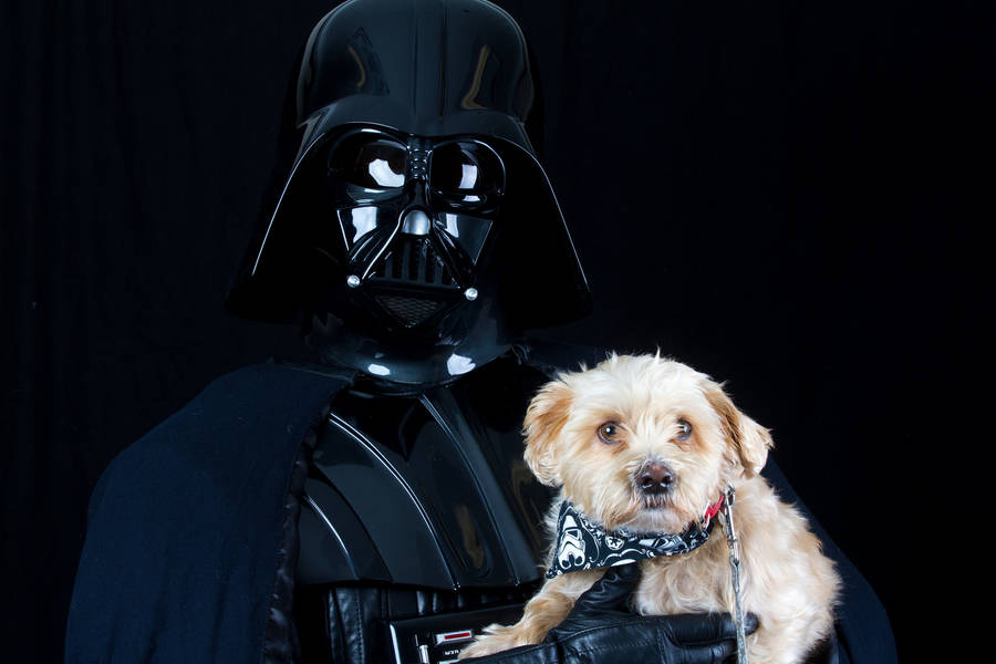 Shelter Animals Portraits with Star Wars Characters (20 pics)