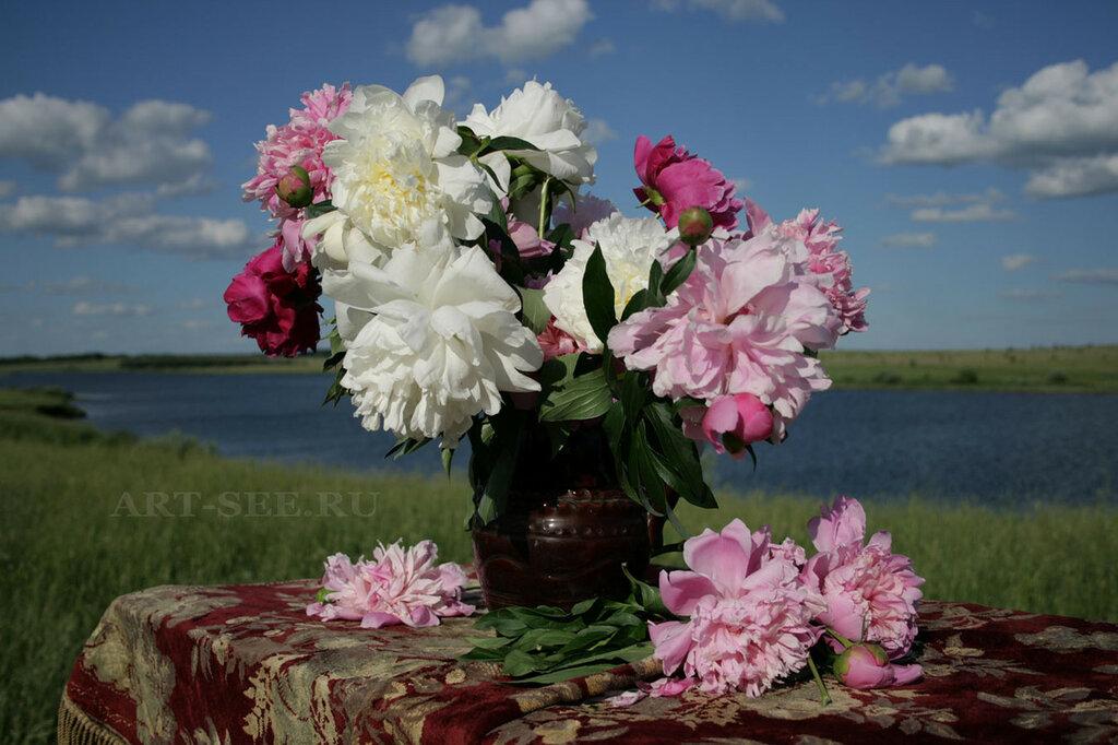 таким видом весна и пионы фото изменять картинку без