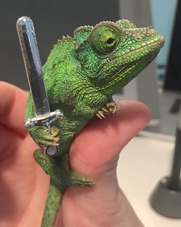 Хамелеон будет держать в руке всё что вы ему дадите