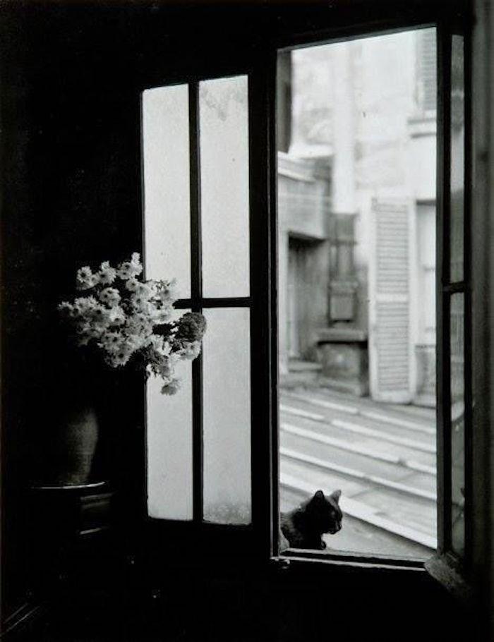 1957. Кошка за стеклом, Горд