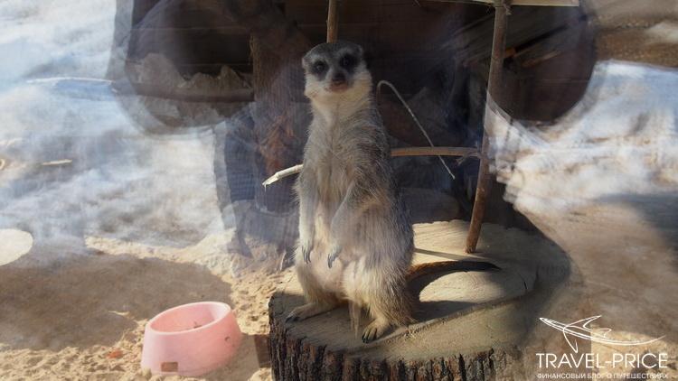 зоопарк в Казани