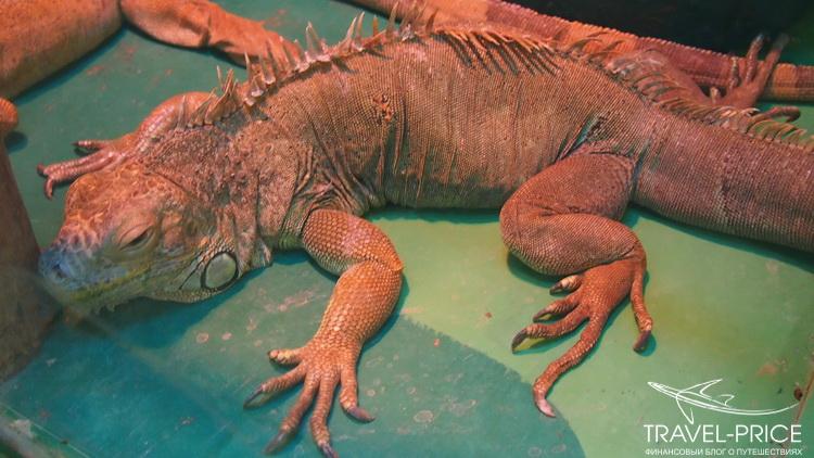 рептилии в зоопарке Казани
