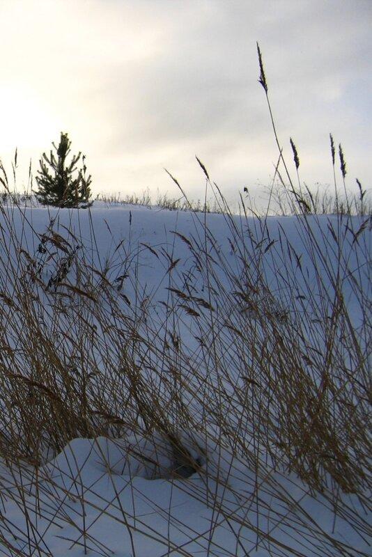 В снегу, зима, Селигер