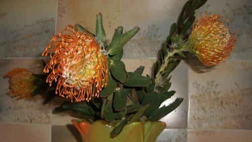 Говорят, что это цветок называется ЛЕУК