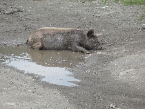 Ну ты прям, как свинья!